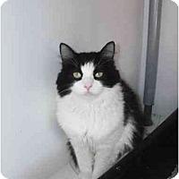 Adopt A Pet :: Delilah - El Cajon, CA