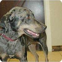 Adopt A Pet :: Chloe (Houston, TX) - Flatonia, TX