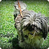 Adopt A Pet :: Dudley - Vancleave, MS