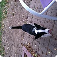 Adopt A Pet :: Pippa - Midwest (WI, IL, MN), WI