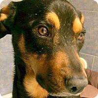 Adopt A Pet :: BUSTER - Higley, AZ