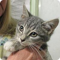 Adopt A Pet :: Miney - Reeds Spring, MO