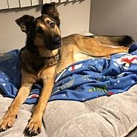 Adopt A Pet :: Shilah - San Diego, CA