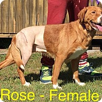 Adopt A Pet :: Rose - Waycross, GA