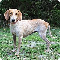 Adopt A Pet :: April - Boca Raton, FL