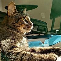 Adopt A Pet :: Mr. Sapphire - Columbus, OH