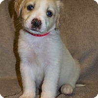 Adopt A Pet :: Chunk - Bellevue, NE