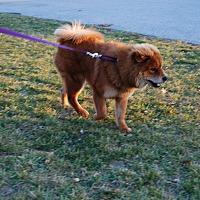 Adopt A Pet :: Bruno - Columbia, PA