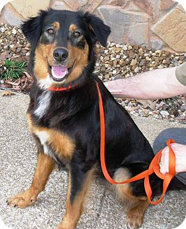 Retriever (Unknown Type) Mix Dog for adoption in Washington, D.C. - Stella