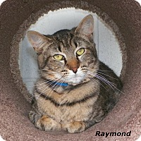 Adopt A Pet :: Raymond - Dover, OH