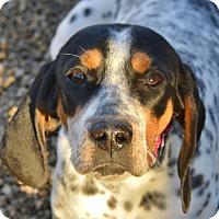 Adopt A Pet :: Avery - Meridian, ID