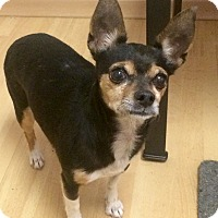 Adopt A Pet :: Princess in CT - Manchester, CT