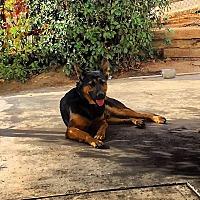 Adopt A Pet :: Caleb - valley center, CA