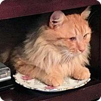 Adopt A Pet :: Fluffy - Rocky Hill, CT