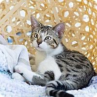 Adopt A Pet :: Hollaway - Montclair, CA