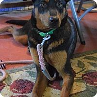 Adopt A Pet :: Kolbi - Greeneville, TN