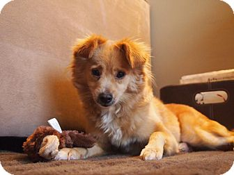 Terrier (Unknown Type, Small)/Chihuahua Mix Dog for adoption in Madison, New Jersey - Blondie