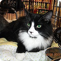 Adopt A Pet :: Joey - Riverside, RI