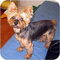 Adopt A Pet :: Jesse - Homestead, FL