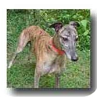 Adopt A Pet :: Safe - Roanoke, VA