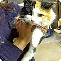 Adopt A Pet :: Foxy - Wakinsville, GA