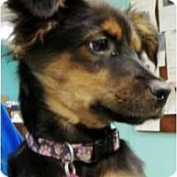 Adopt A Pet :: Aaron - Sunnyvale, CA