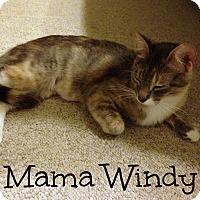 Adopt A Pet :: Windy - Bentonville, AR