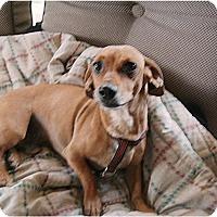Adopt A Pet :: Shiloh - Tucson, AZ