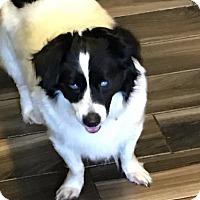 Adopt A Pet :: Dory - Brooksville, FL