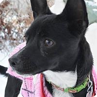 Adopt A Pet :: Selena - Meridian, ID