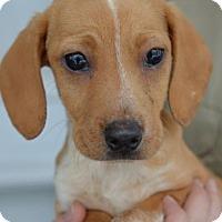 Adopt A Pet :: Esther - Danbury, CT