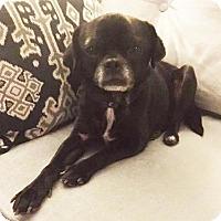Adopt A Pet :: Meeka - Fairmont, WV