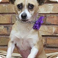 Adopt A Pet :: Sahara - Benbrook, TX