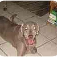 Adopt A Pet :: Hunter - Eustis, FL