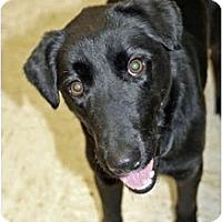 Adopt A Pet :: Sadie - Racine, WI
