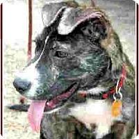 Adopt A Pet :: Bubbie - Kingwood, TX