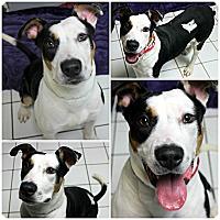 Adopt A Pet :: Peyton - Forked River, NJ