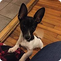 Adopt A Pet :: Gordon - Chicago, IL
