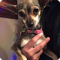 Adopt A Pet :: BONNIE - Corona, CA