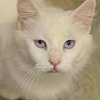 Adopt A Pet :: Persia - Hammond, LA