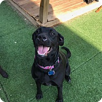 Adopt A Pet :: Nikki - oklahoma city, OK