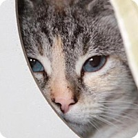 Adopt A Pet :: *JOSIE - Camarillo, CA