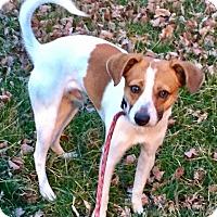 Adopt A Pet :: Buster - Lisbon, IA