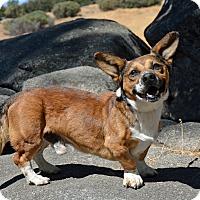 Adopt A Pet :: Impala - Mountain Center, CA