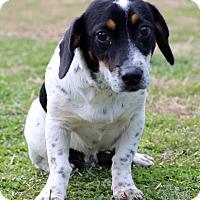 Adopt A Pet :: Archery - Waldorf, MD