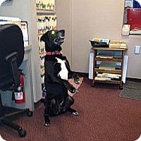 Adopt A Pet :: Lakota - Richfield, OH