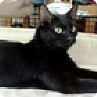 Adopt A Pet :: Gaia - Vancouver, BC