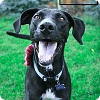 Adopt A Pet :: Belle - Minneapolis, MN
