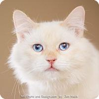 Adopt A Pet :: Alfie - Fountain Hills, AZ