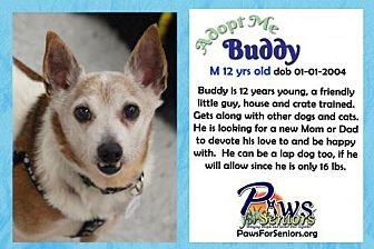 Jack Russell Terrier/Chihuahua Mix Dog for adoption in Bealeton, Virginia - Buddy (JRT)